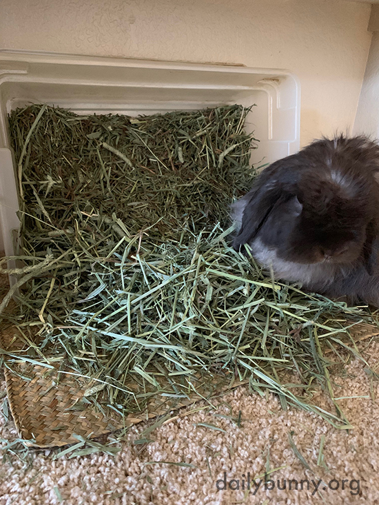 Hay Tastes Better When You Make a Mess with It First