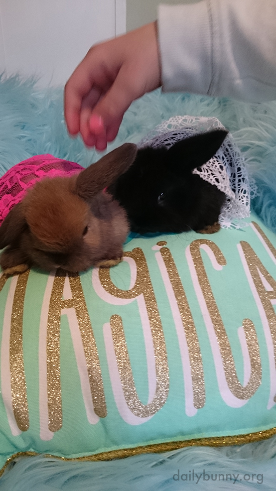 Bunnies ARE Magical