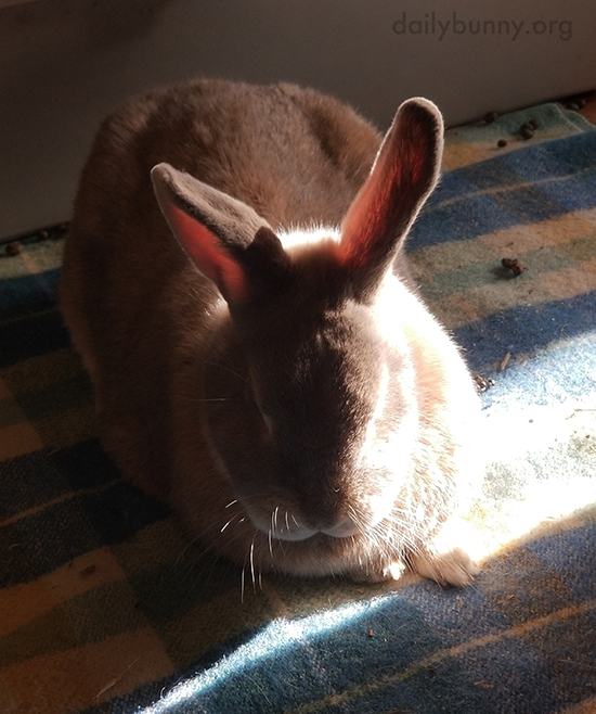 Bunny Knows a Sunbeam Makes a Nap a Little Cozier