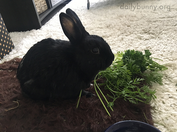 Bunny Knows the Importance of Eating Her Greens