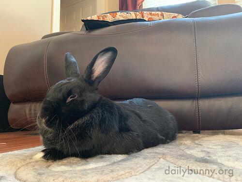 Bunny Settles into Optimal Pets-Receiving Torpedo Mode 1
