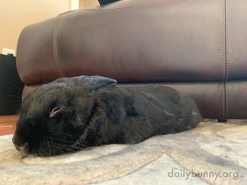 Bunny Settles into Optimal Pets-Receiving Torpedo Mode 2