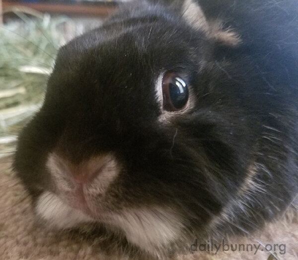 Closeup of Bunny's Sweet Face