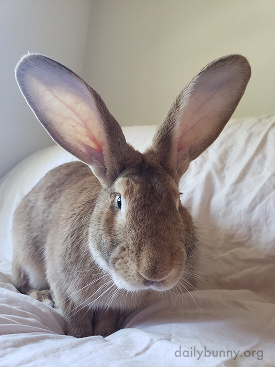 Bunny Has SUCH a Smoochable Nose