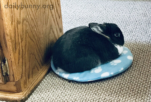 If Bunny Fits, He Sits