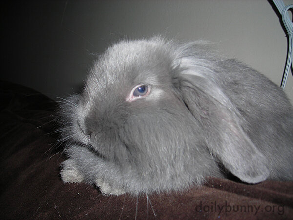 Did I Do Something to Offend You, Bunny?