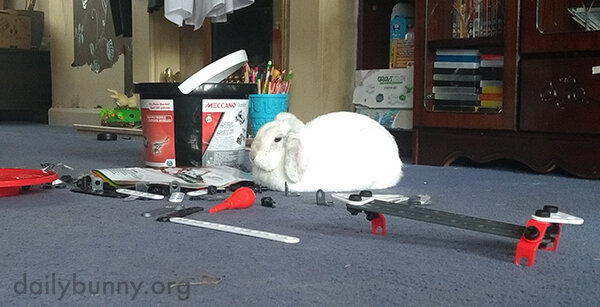 Bunny Is Doing the Same Thing She Does Every Night - Try to Take Over the World!