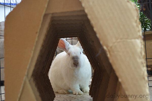 Bunny, Through the Tunnel