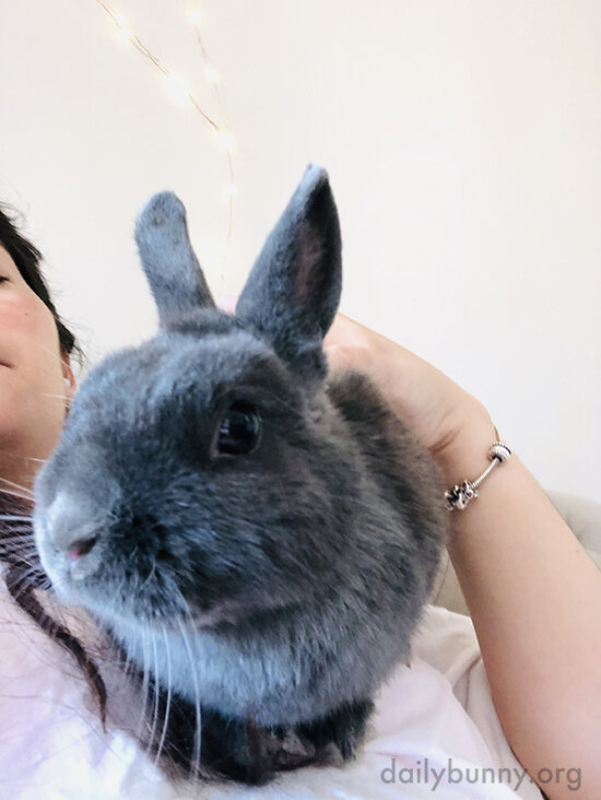 Bunny Climbs on His Human to Make It Clear Who Really Runs the Show Around Here