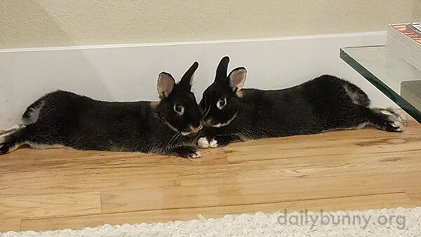 Bunnies Are the Mirror Images of Each Other