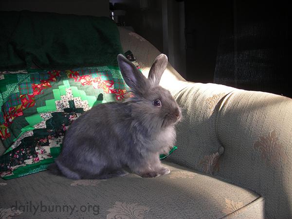 Bunny Just Heard Someone Peeling a Banana in the Kitchen