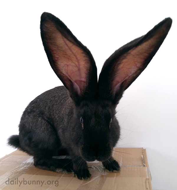 I Think Bunny Can Hear Deep Space with These Ears