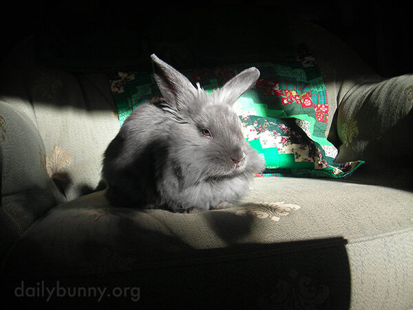 Bunny Clearly Suffers No Fools