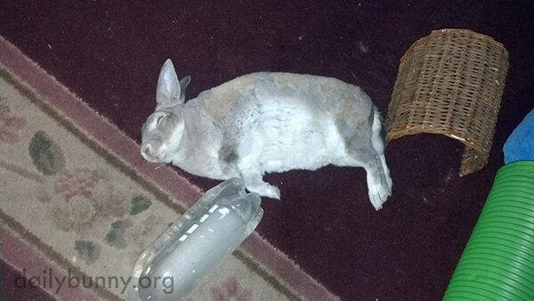 That Is One Comfortable Bunny