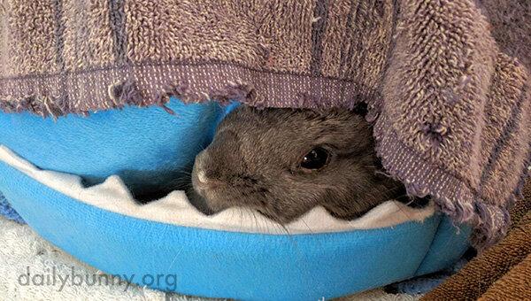 The Coziest Bunny