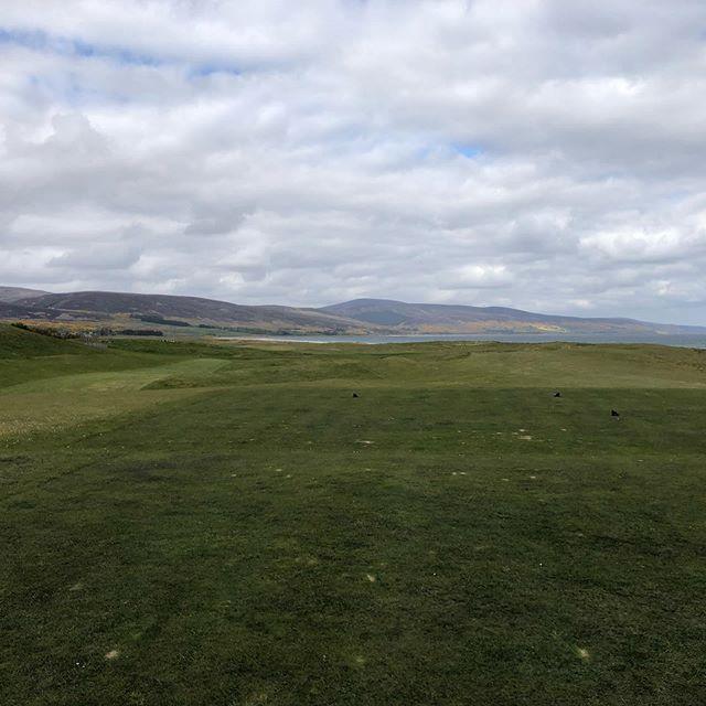 Brora; light, cattle, golf balls scudding through on a windy day. 3 hours of testing golf #broragolfclub #linksgolf #golfscotland #thelinksgolfer #golf #alzheimersawareness #glenmuir