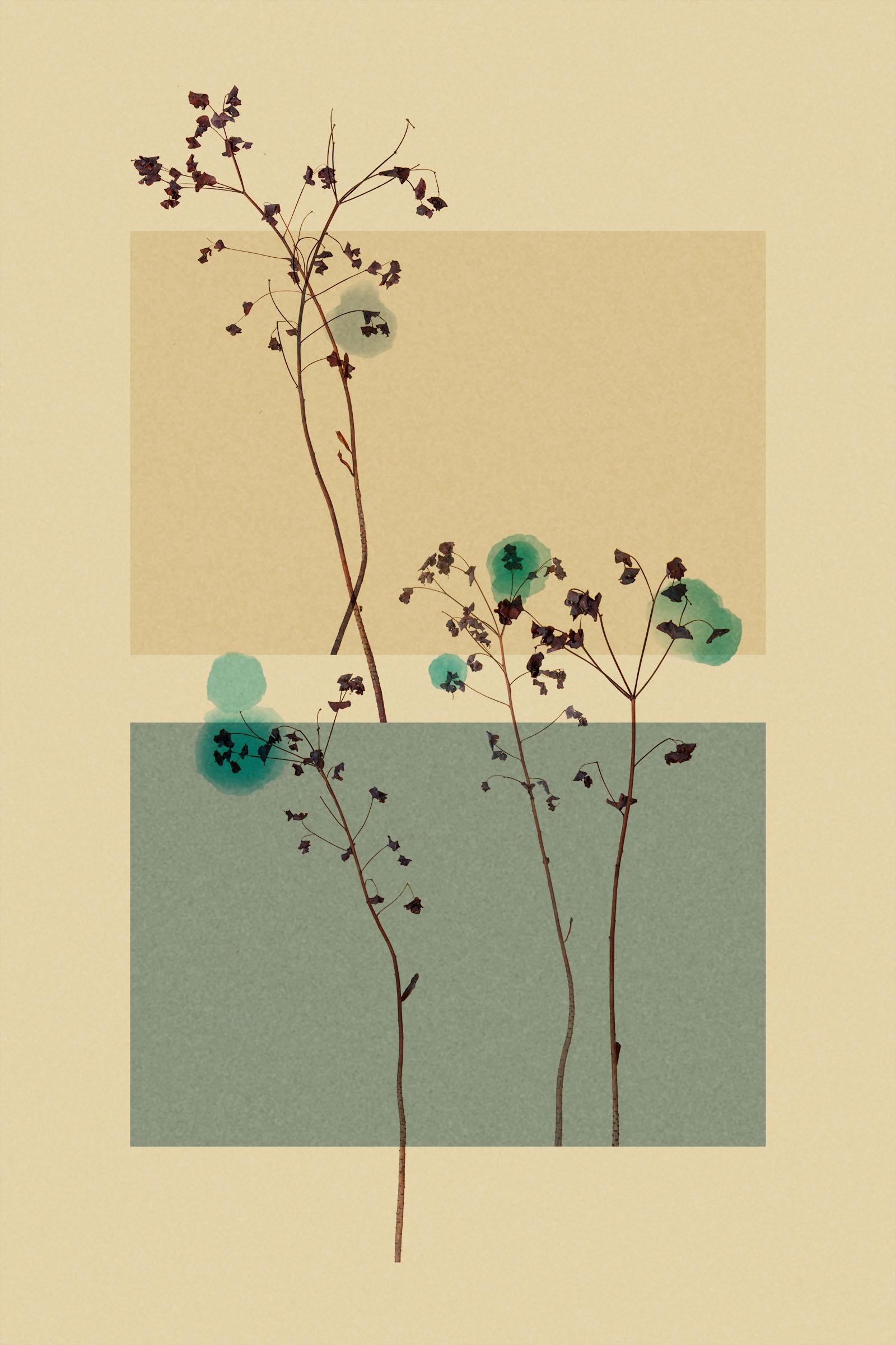 TEST - hanging plants0582.jpg