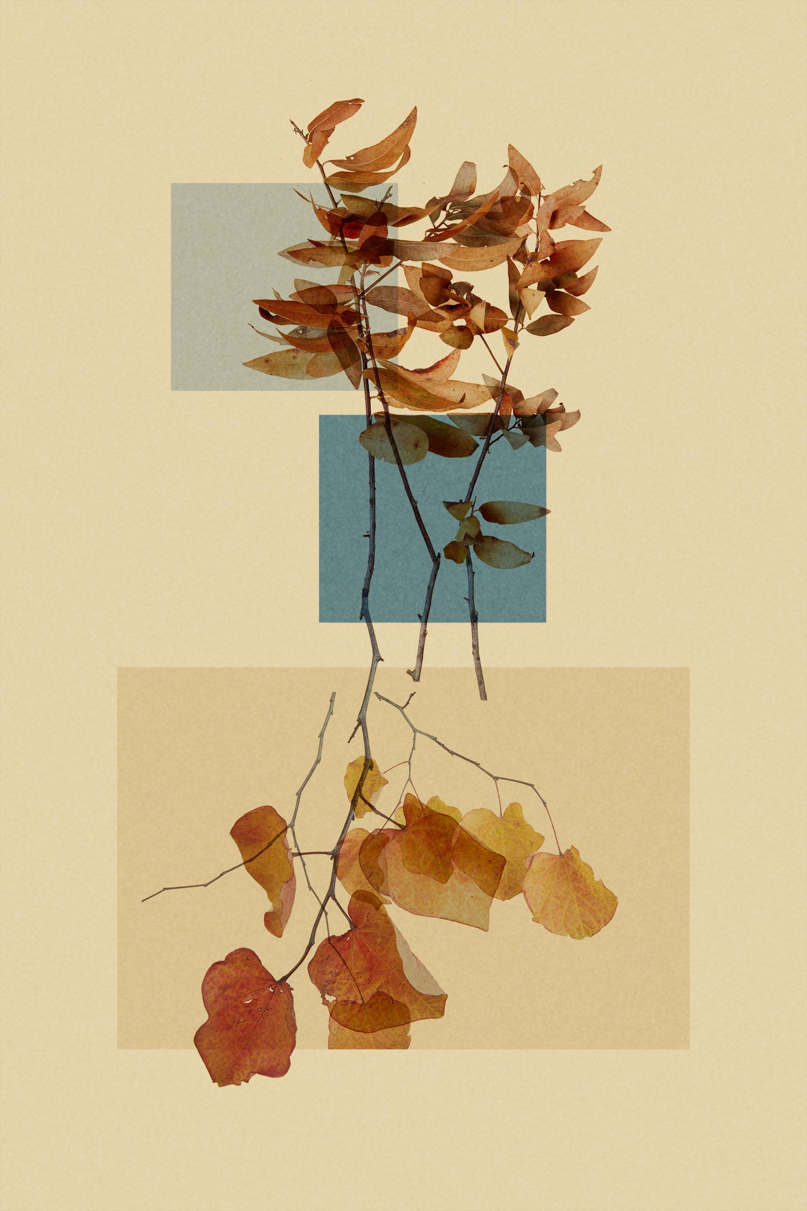 TEST - hanging plants0584.jpg