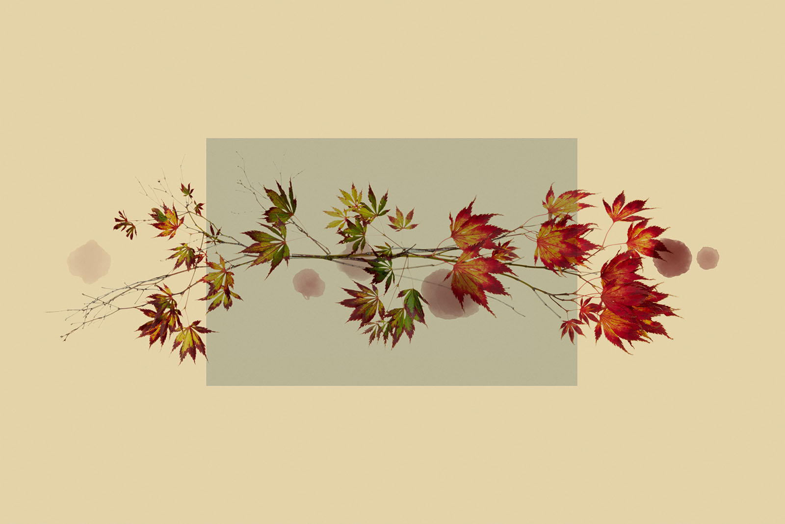 TEST - hanging plants0586.jpg