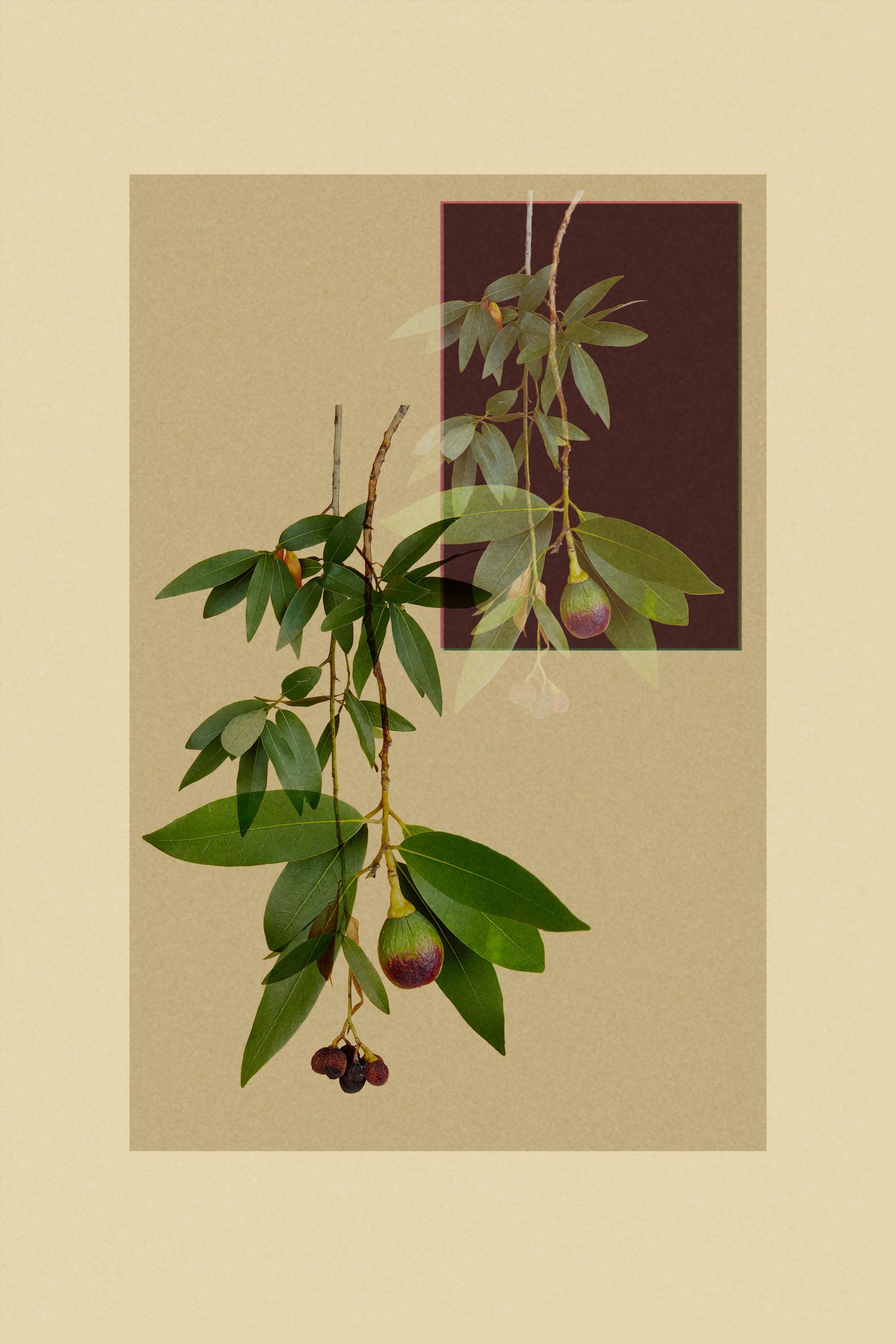 TEST - hanging plants0585-2.jpg