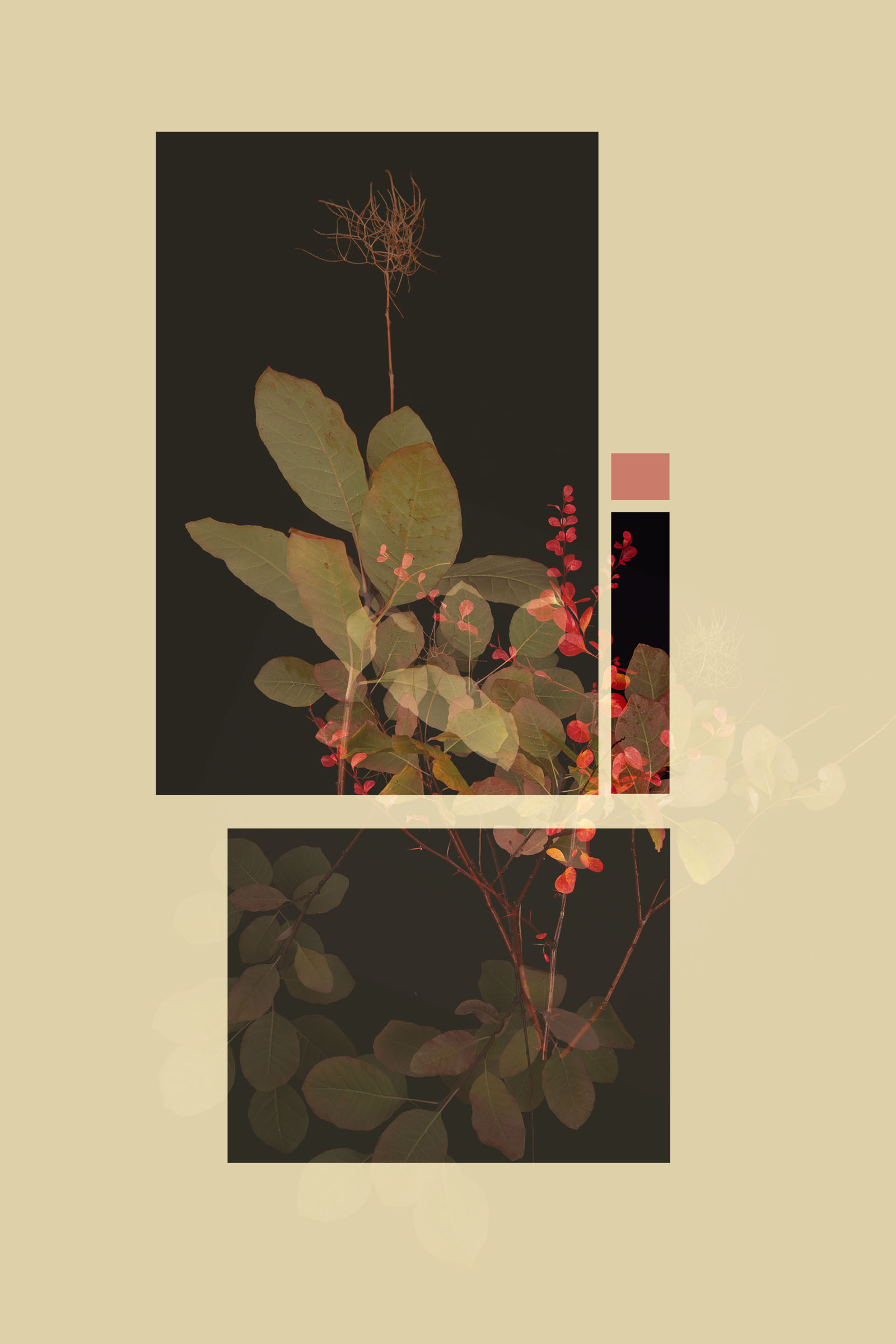 TEST - hanging plants0587.jpg