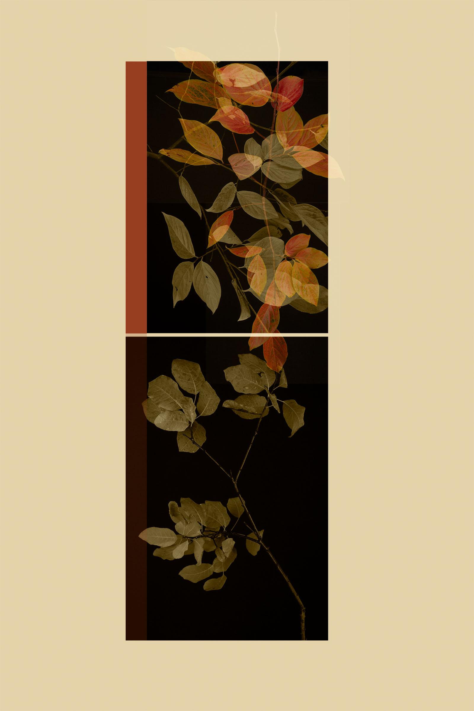 TEST - hanging plants0588-2.jpg