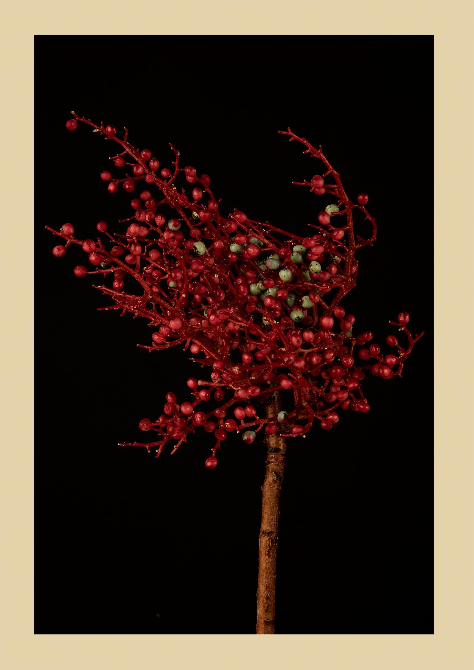 TEST - hanging plants0589-2.jpg