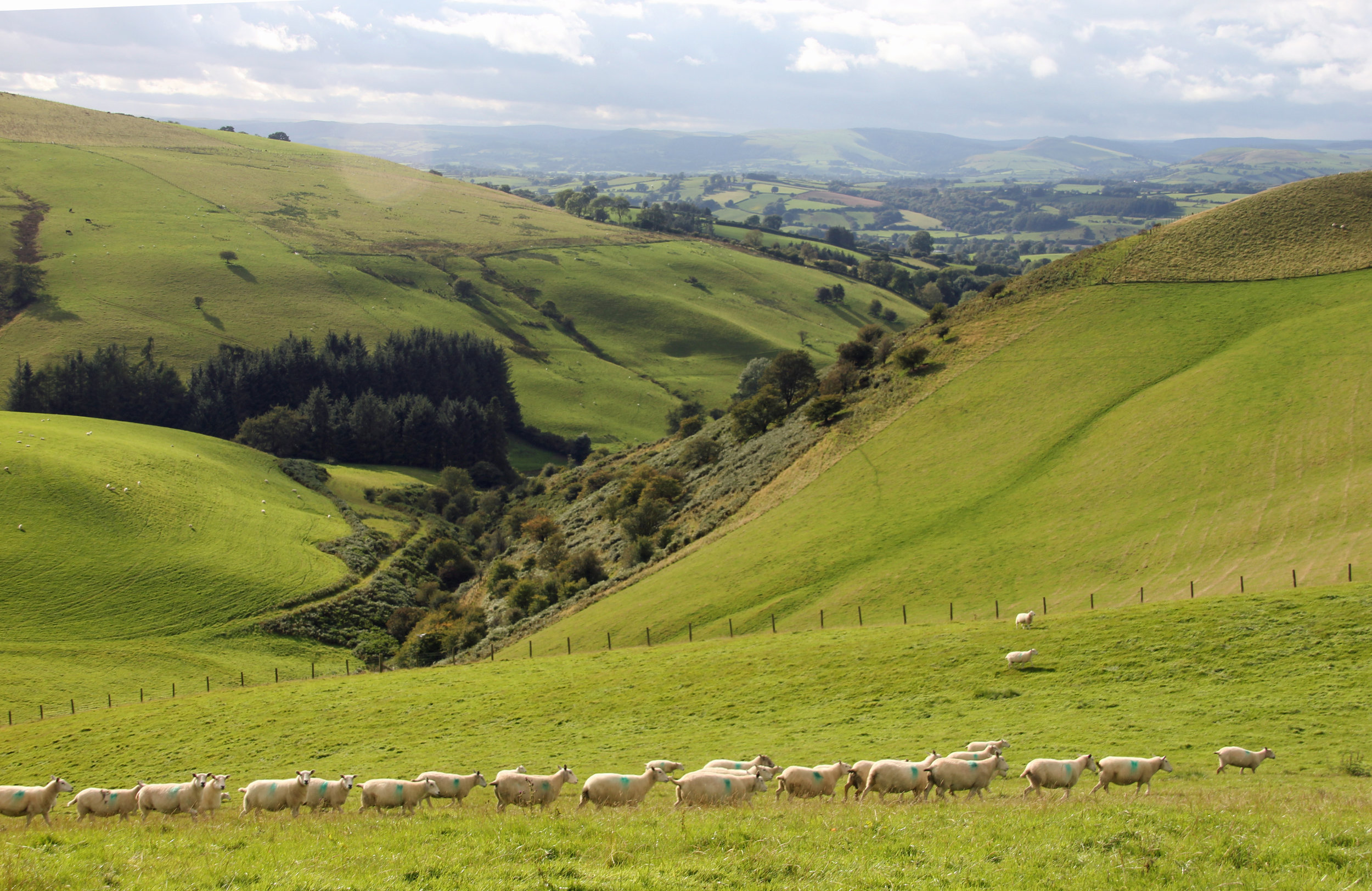 Local walk from Drovers Retreat   Local walks -  there are many from the front door!  Learn Mo  re →