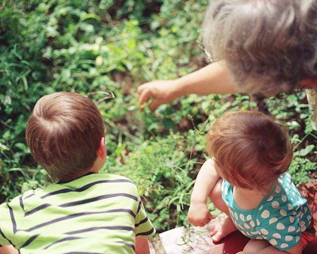 Kunnen grootouders hun erfenis rechtstreeks aan hun kleinkinderen nalaten? Hoe doen ze dit best en welke beperkingen zijn er? Alle info via de link in bio! #thelegalhome #TLH