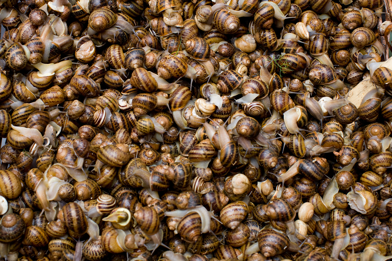 Live snails: 8 Euros per kilo.