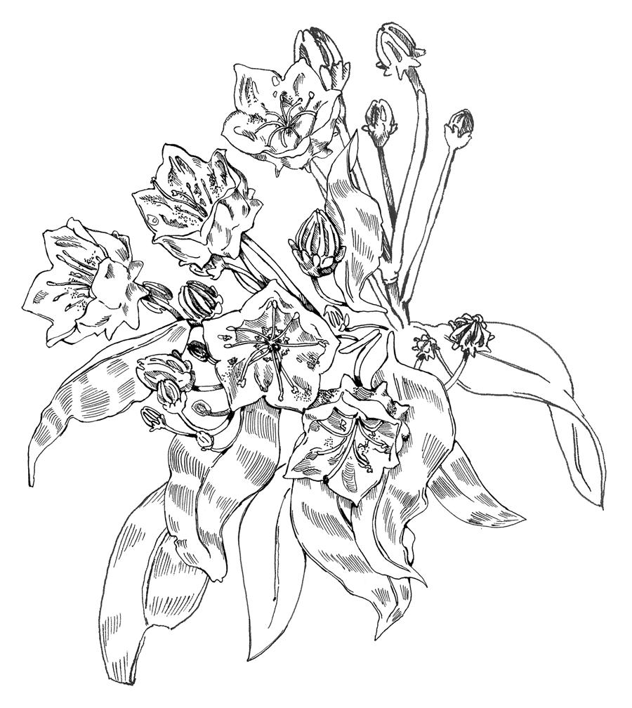 red-oak (1).jpg
