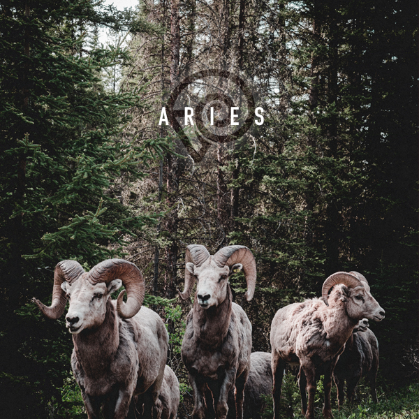 herd-rams-forest-aries.jpg