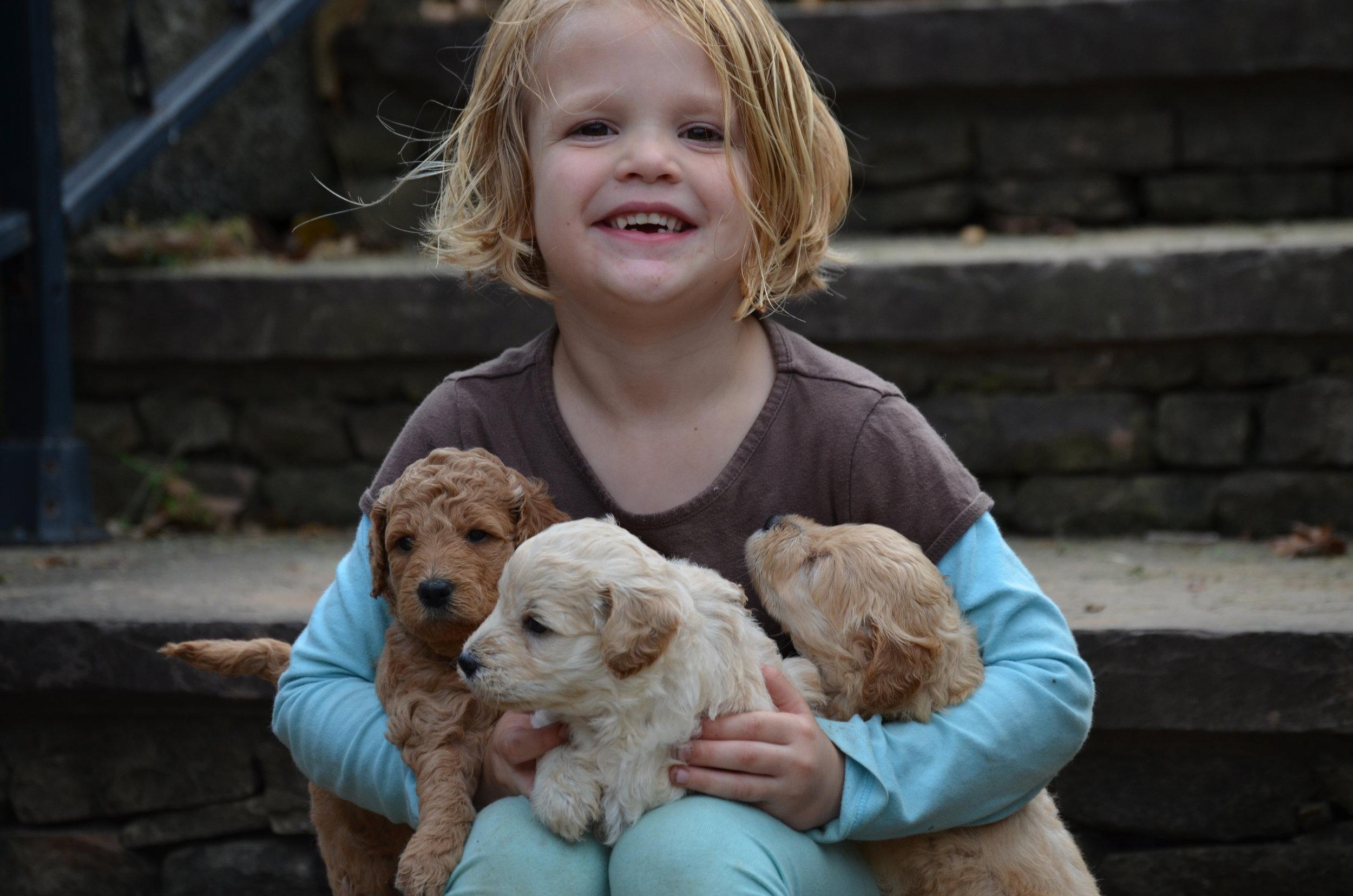 petite-mini-Goldendoodles (4).JPG