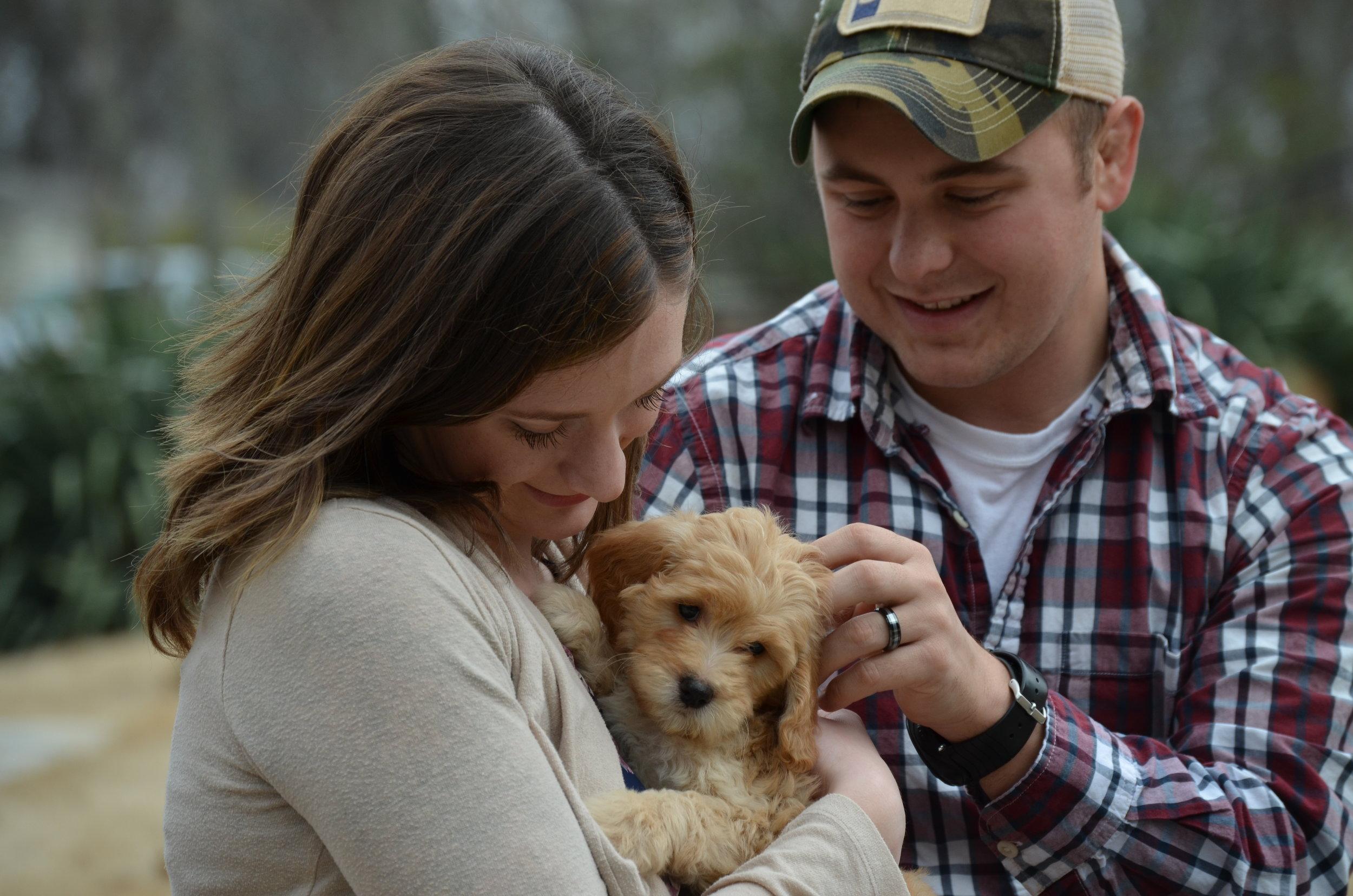 Goldendoodle puppy comparison