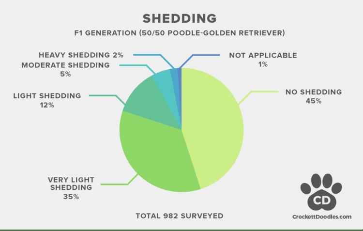 f1 goldendoodle shedding stats