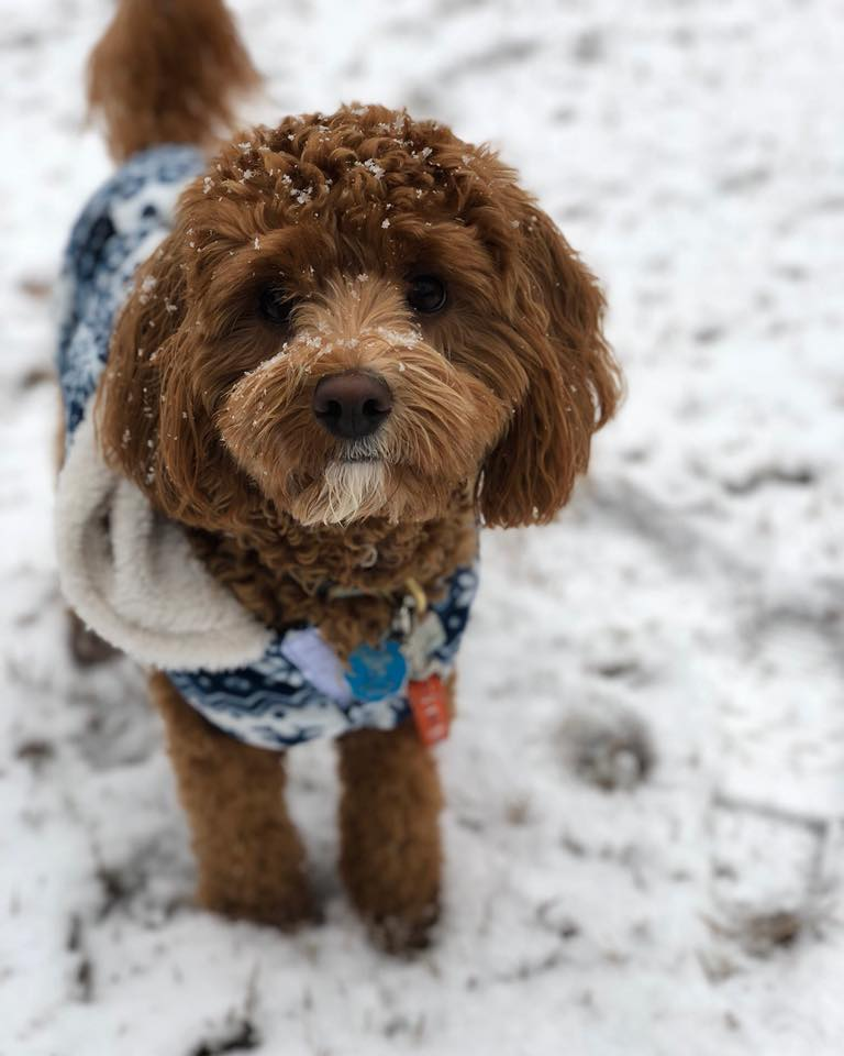 Option 2: We love to (1) play hide and seek in the house, (2) take windows-down rides around town in the spring, and (3) play in the occasional snow during the winter! - Lauren Stephens
