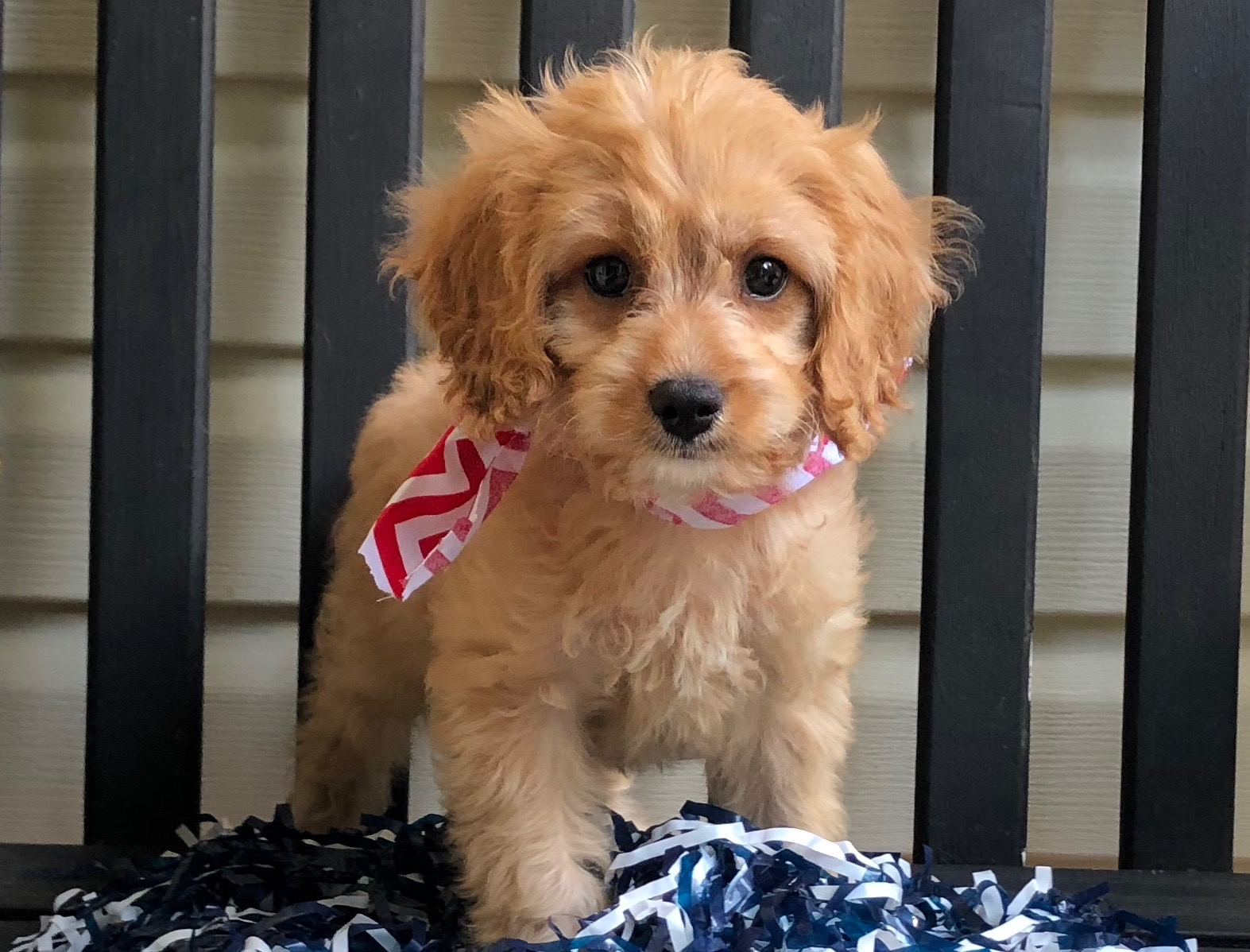 patriotic-doodle-puppy