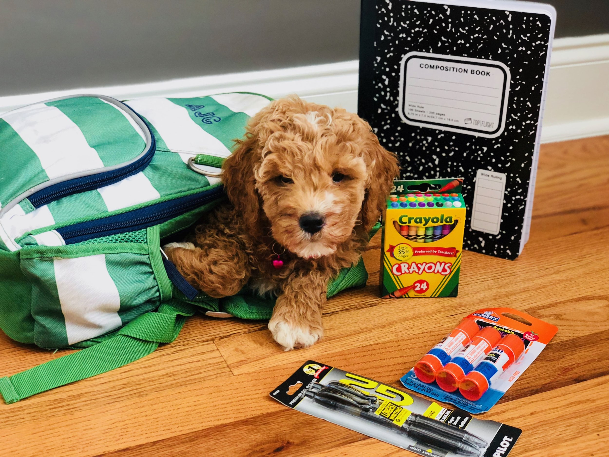 cute doodle puppy with school supplies