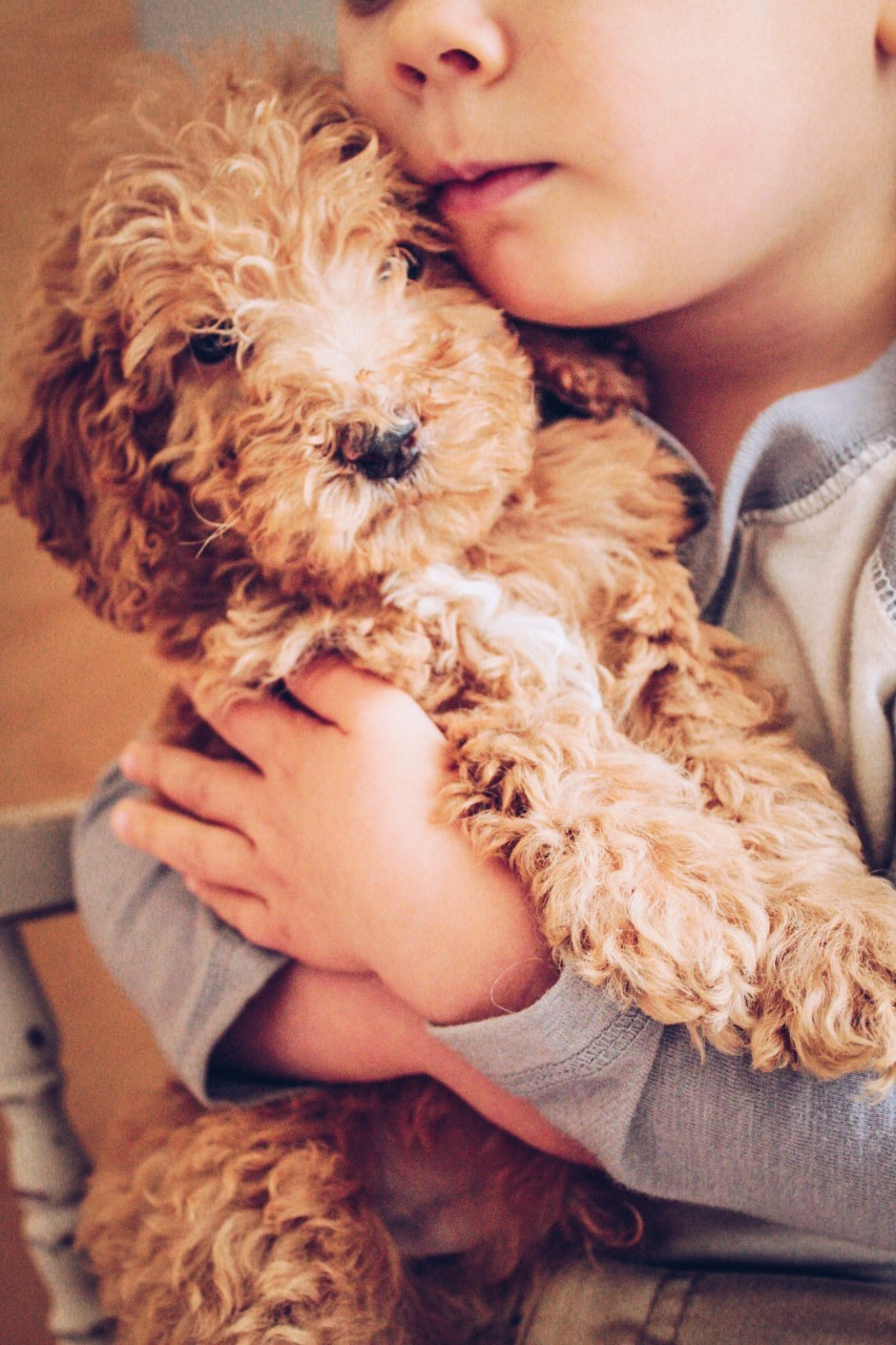 mini Goldendoodle (27).jpg
