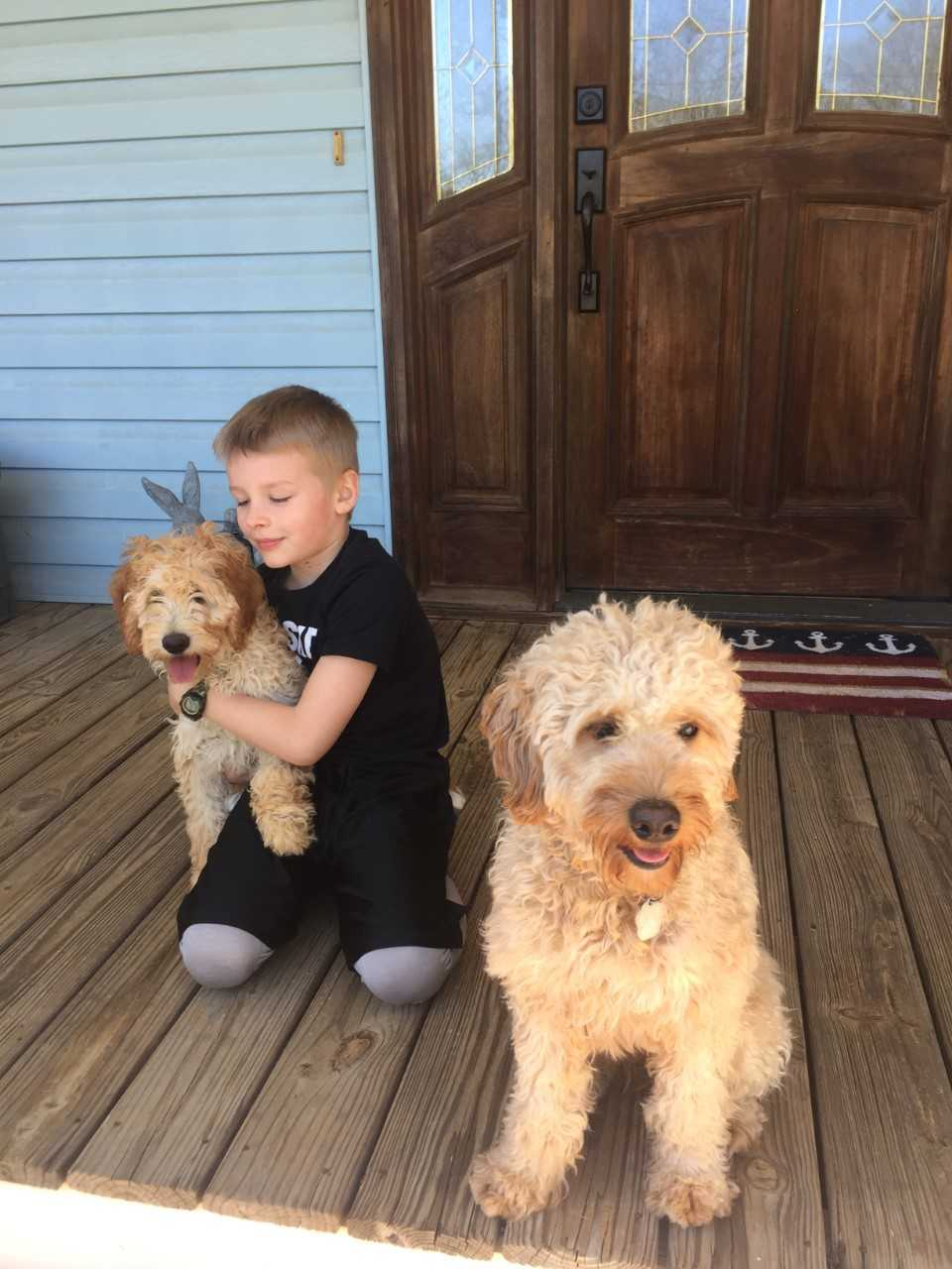 Lucy, the mini Goldendoodle mom