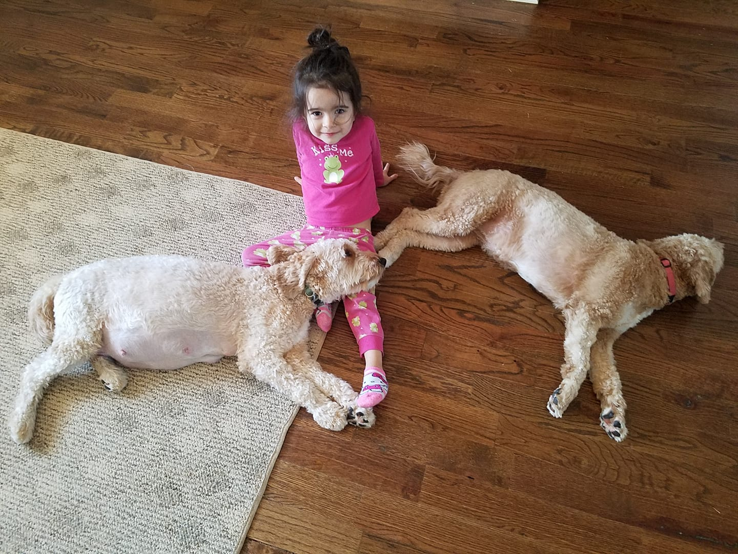 Mimi (on the left), the Goldendoodle mom; with her best friend and her sister. She's the beloved pet of one our guardian homes.