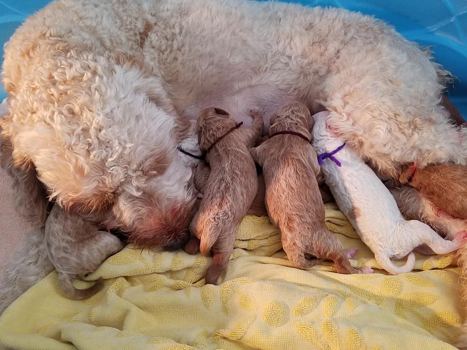 Mimi, sleeping with her pups