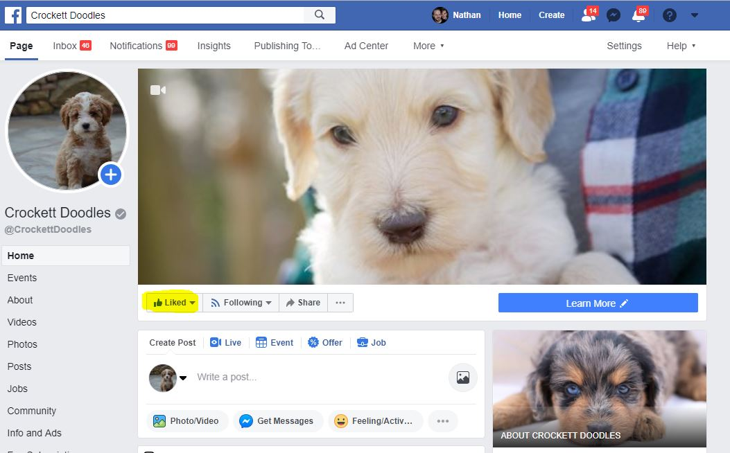 "It's simple to ""like"" our Crockett Doodles Facebook page, just click the  Like  button under the main picture (see the yellow highlighted area in the picture above). We're hoping to have at least 60,000 people like our page by June 21, 2019."