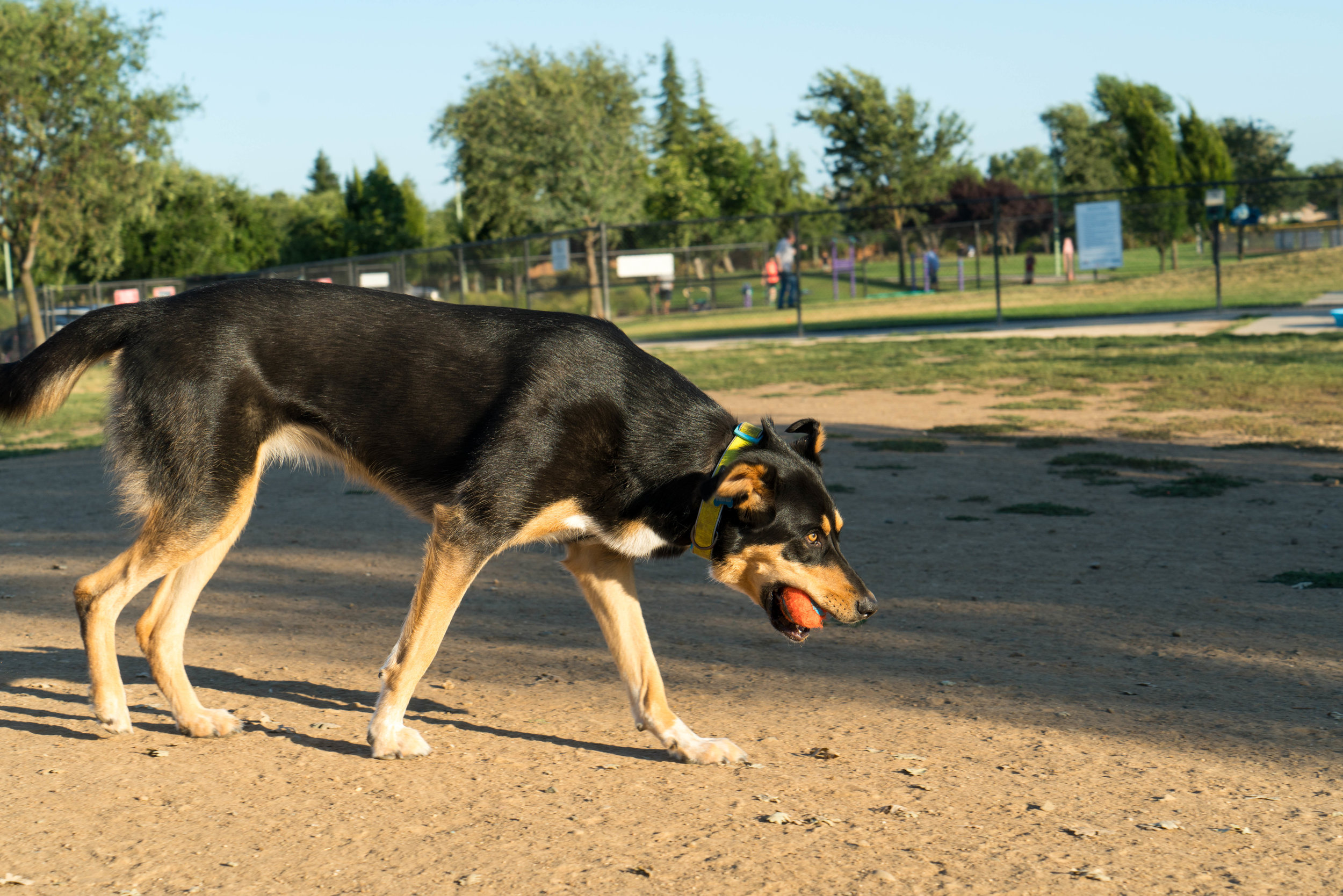dog-park-jul-4-weekend-15.jpg