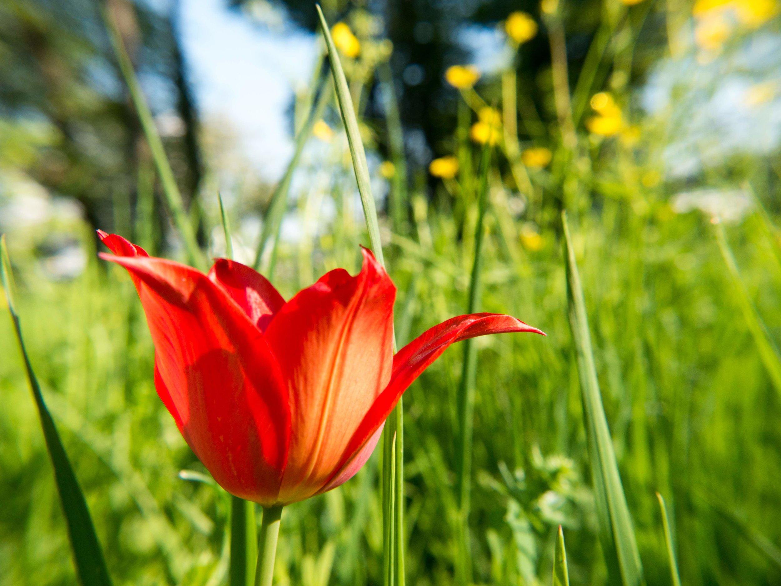 Spring (35 von 47).jpg