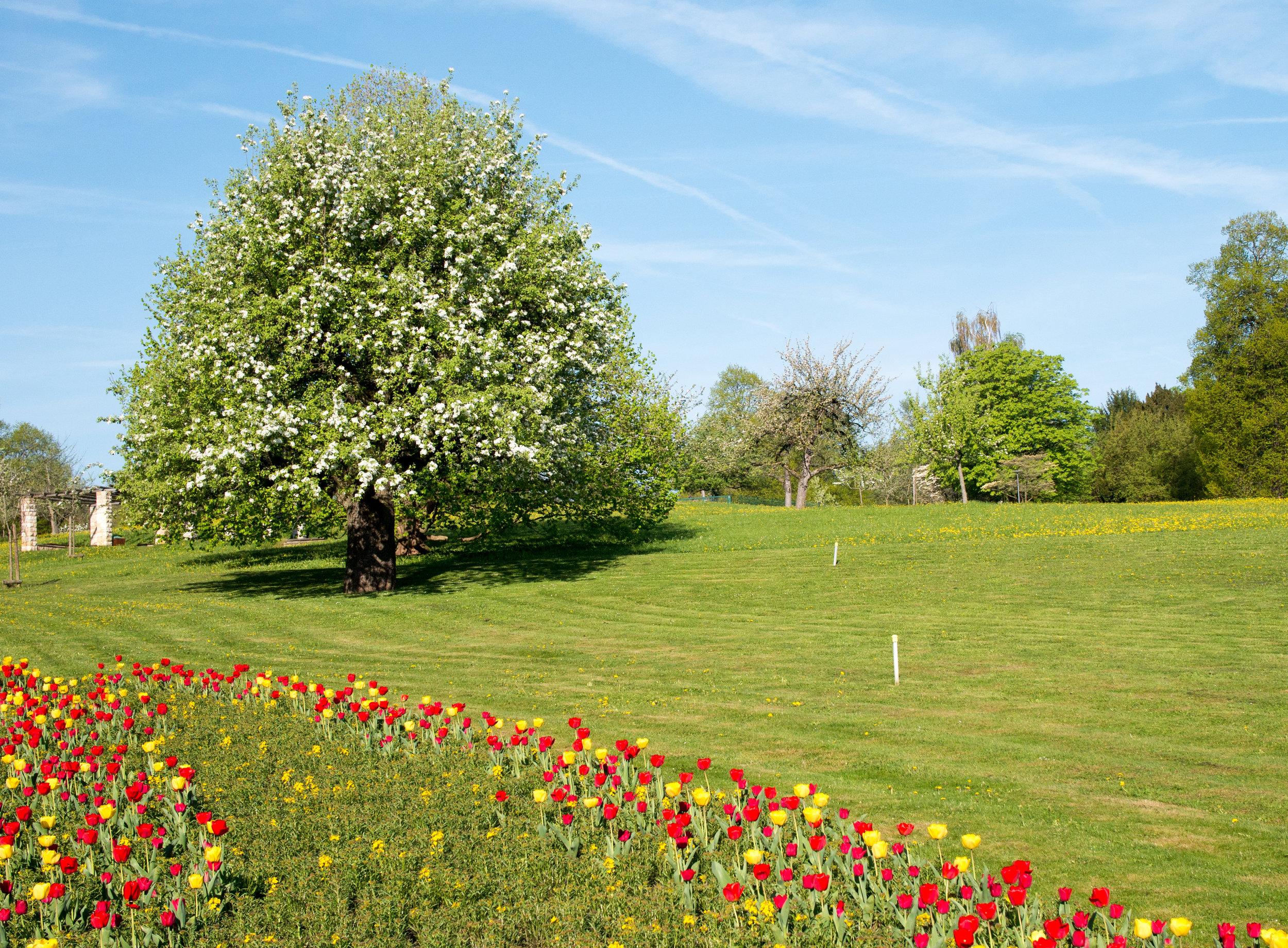 Spring (3 von 47).jpg