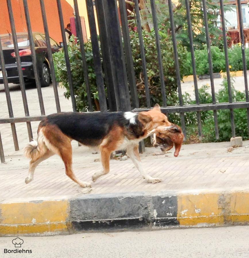 Egypt pics-27.jpg