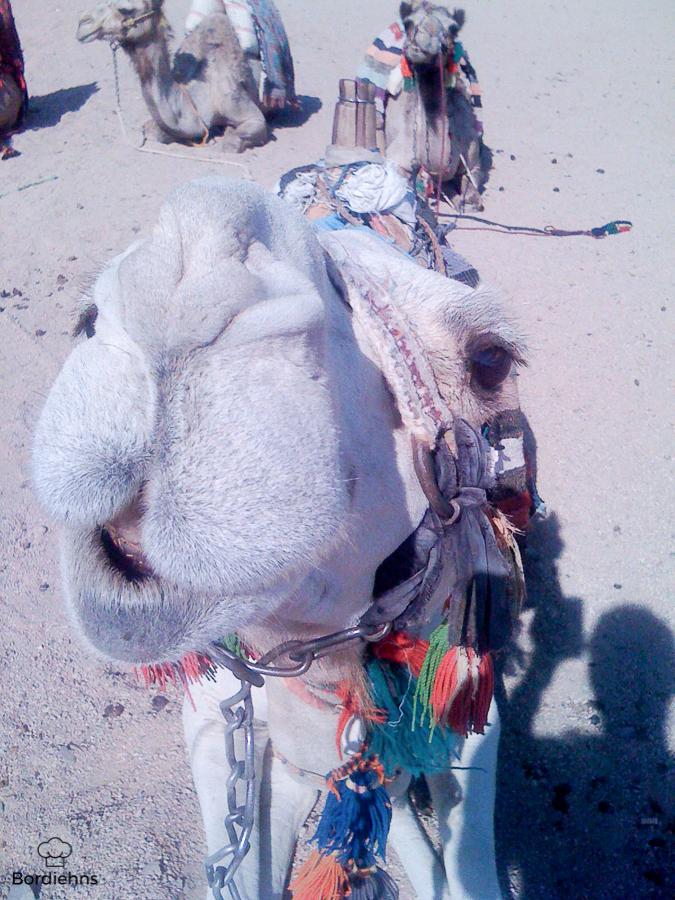 Egypt pics-172.jpg