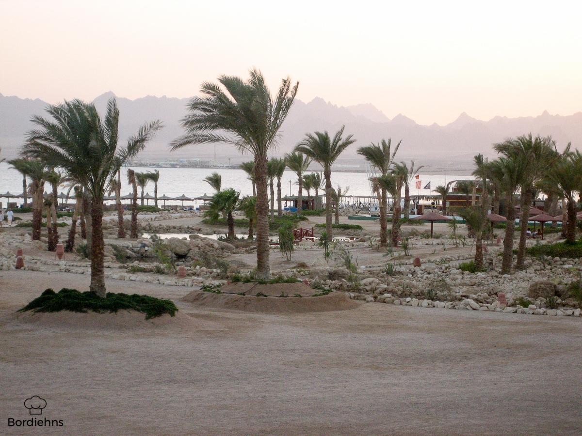 Egypt pics.jpg