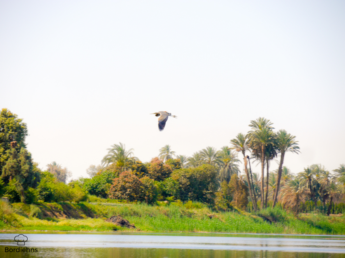Luxor-113.jpg